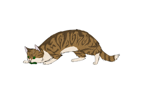 Leafpool by SilverOrcaaKitty17