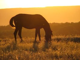 The Horse by Mikeleus