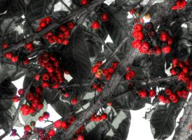 Red Fruit by xandra14