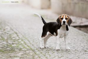 My dog by vadalein