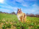 Country flower by hermio
