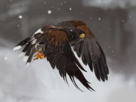 more feather study by dantevirgil