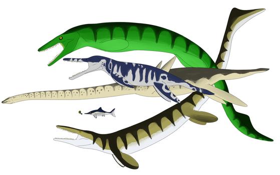 Carnegie Collection - Marine Reptiles by StygimolochSpinifer