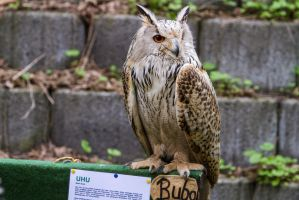 Eagle Owl Stock by LuDa-Stock