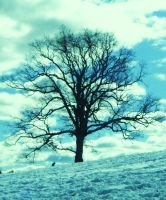 tree at nun hill by momshea4
