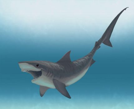 Tiger Shark 2012 by feeves