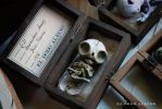 Homunculum domus , boxed ooak art doll . by dodoalbino
