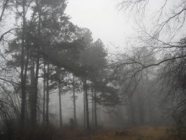 Foggy Day in the Woods 1 by BLUEamnesiac