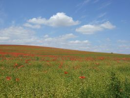 poppy field by Sceptre63