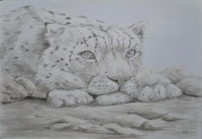 reflective snow leopard by acrylicwildlife