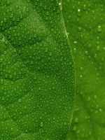 Water drops on leaves 28 by eco6org