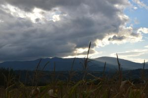 Corn fields and clouds by A1Z2E3R