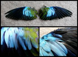 Scarlet-chested Parrot Wings by CabinetCuriosities