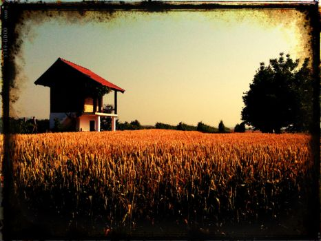 Field of Gold by mGusatovic
