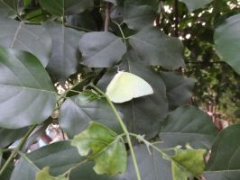 Yellow butterfly on leaf stock - thewayur by thewayur
