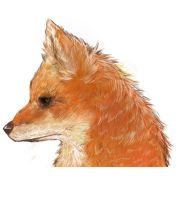 Fox by MadnessUnlimited