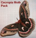 Cecropia Moth Pack by Rubyfire14-Stock