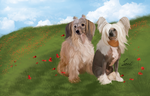 Digital painting, chinese crested dogs by LeslyO
