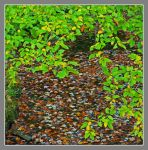 Wet leaves. L1040354, with story by harrietsfriend