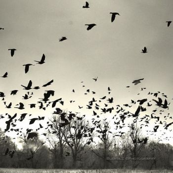 A picture is worth a thousand crows... by deathly-stillness