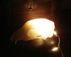 Bear skull lamp by missmonster
