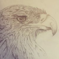 Eagle Drawing by oSpacey
