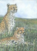 Cheetahs on watch no2 by acrylicwildlife