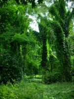 Green Heaven by Stormbell