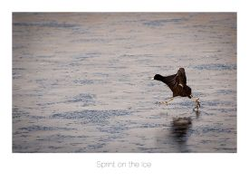 Sprint on the Ice by AlexMarshall