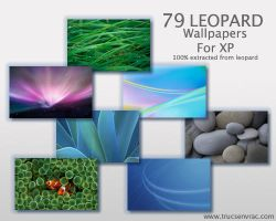 79 Leopard Wallpaper for XP by nobodyuse
