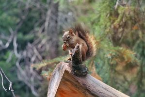 Squiggles the Squirrel by Izzie-Hill