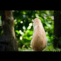 Is this a Cat or Monkey? by Renez