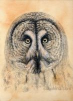 Great Grey Owl by sschukina