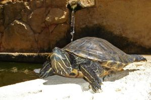 I like turtles by Riddande