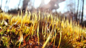 Moss II by Miss-Madonna