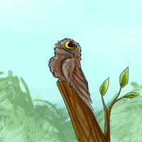 POTOO by RoomsInTheWalls