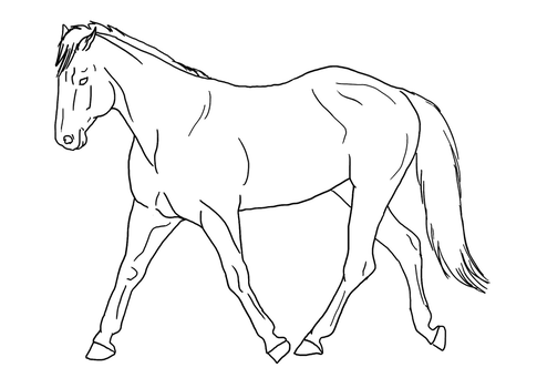 Trot lines public domain by Allicorn
