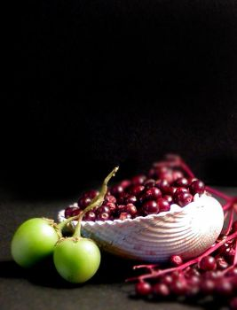 Shell and Elderberries by Sunnoah