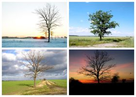 One tree, four seasons by Dryhand58