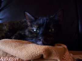The cat stare. by Lanth