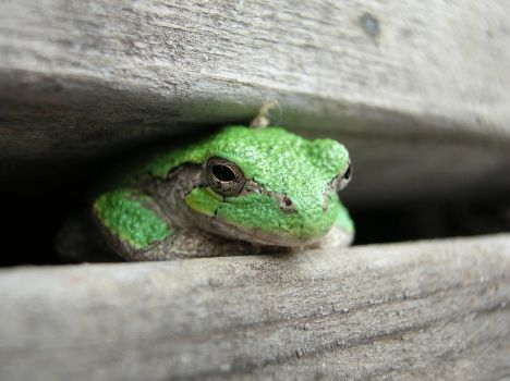 TreeFrog by abstractIntention