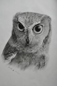 Owl sketch by Namelesspeon