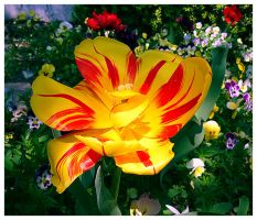 stained tulip by Iulian-dA-gallery