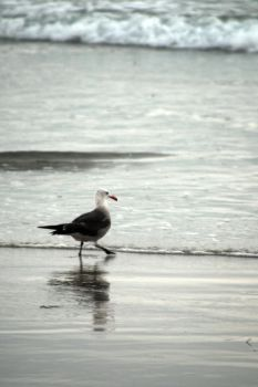 Bird In The Surf by LDFranklin