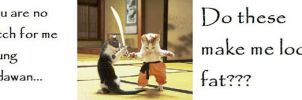 Funny cats sword fighting by Devian-tard
