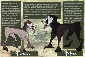 Female vs. Male Mask Hounds by sugarxKAT