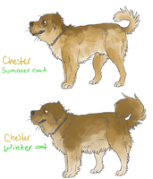Chester coats by PaintedPeaches