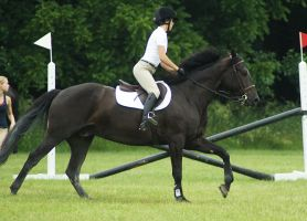 Eventing Horse Show Stock 19 by almondjoyy5