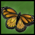 Monarch Butterfly by Estarr
