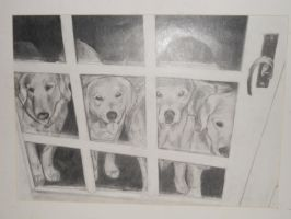4 dogs by TheIncredibleTheory